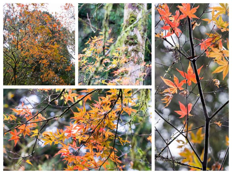 DSC_5463_Fotor_Collage.jpg